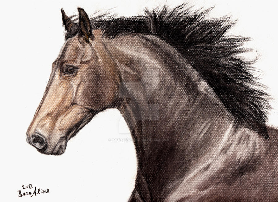 Signed poster Version - Danish Warmblood by imFragrance