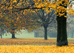 Autumn II.