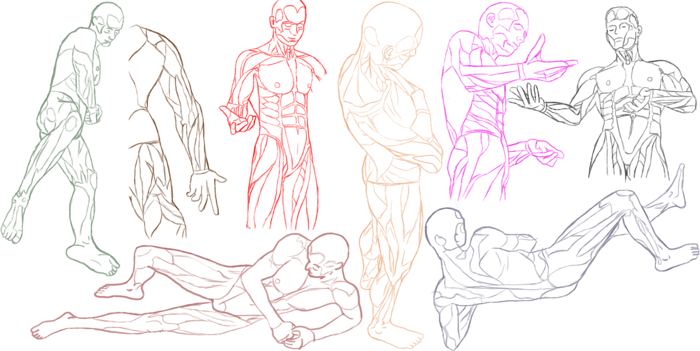 Male Anatomy Practice by Amenarae