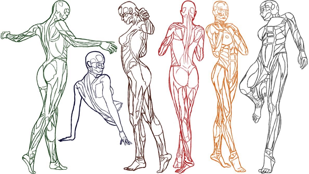 Female Anatomy Practice by Amenarae