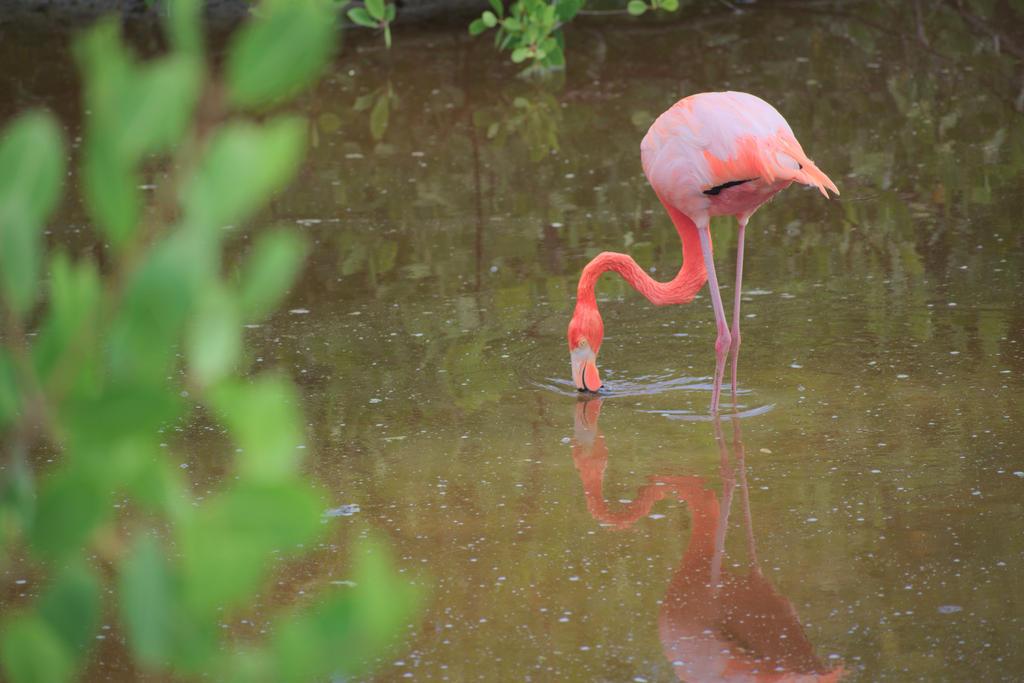 Isabela Flamingo by elfgurl06