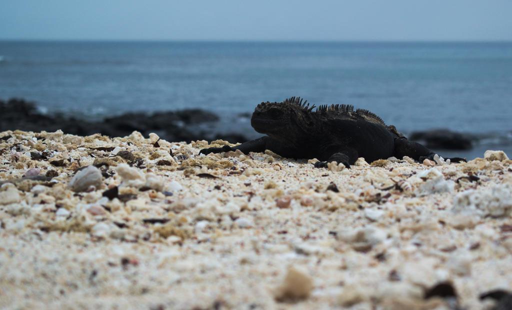The Galapagos Marine Iguana by elfgurl06