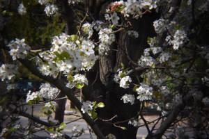 Holga Lens Flowers