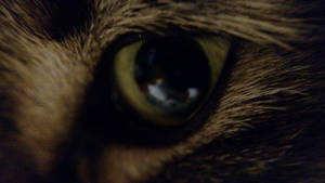 Kitty eye by Messinground