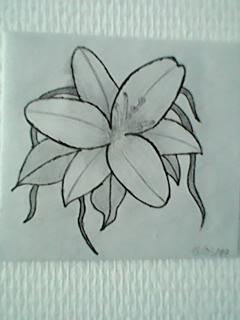 lys flower by schappacher