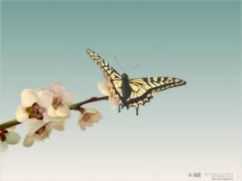 the Butterfly. by AiK-art