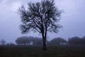 Fog 5 by kwuus