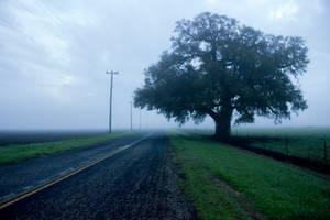 Fog 7 by kwuus