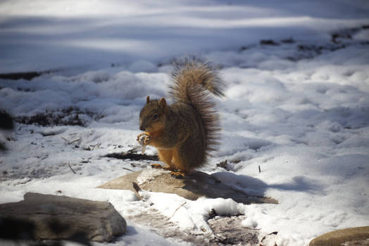Squirrel In The Snow