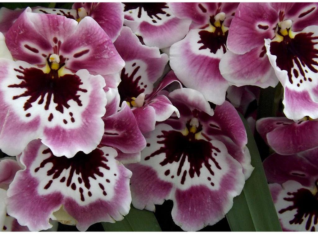 Botanical Wonders II by Cassandra022