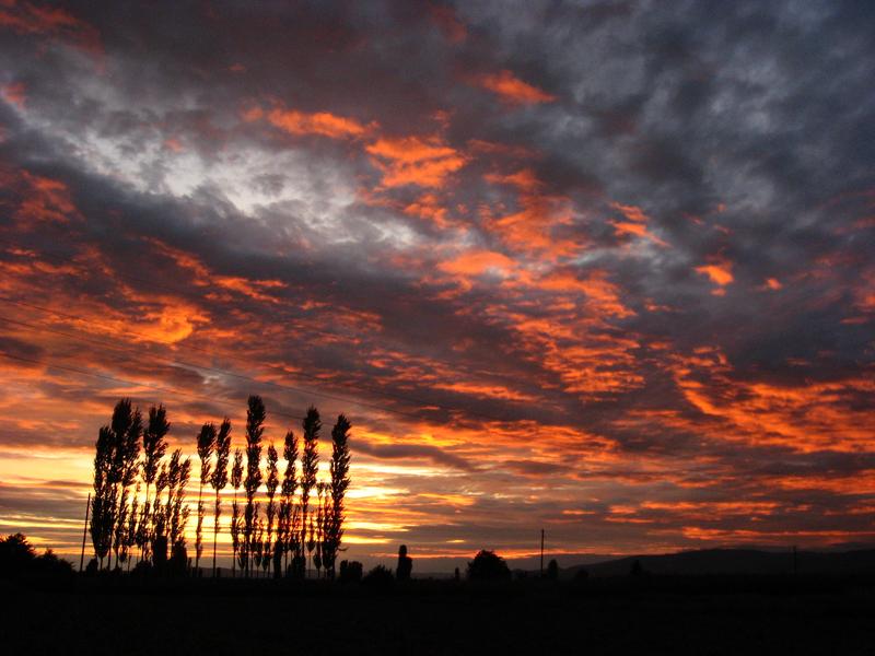 A poplar sunset by djzealot