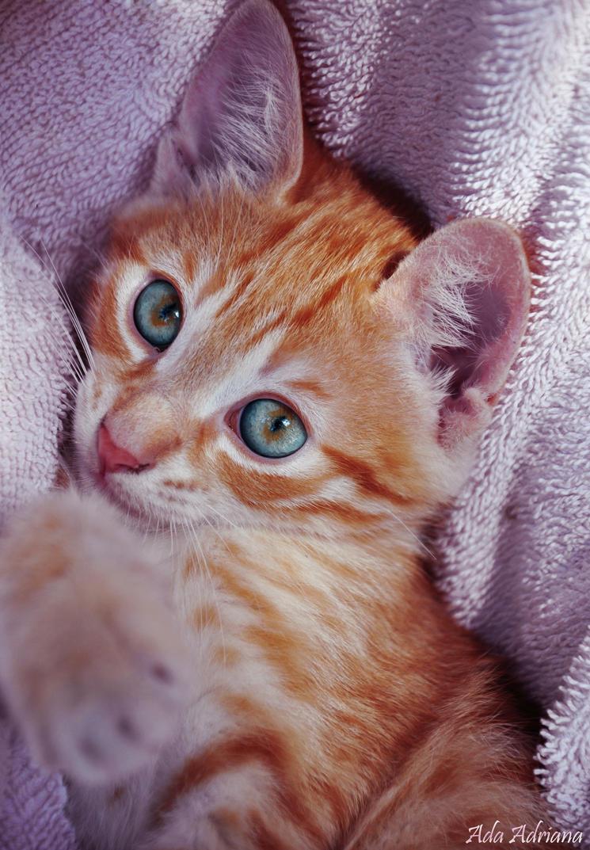Kitten by ada-adriana
