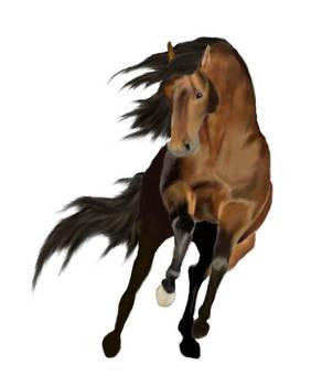 Horse by Jewl1