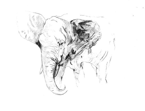 Elephant by Bobite
