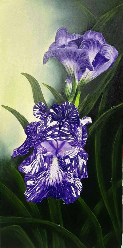 Purple Iris by PurpleInsperation7