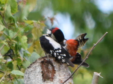 Woodpecker's Cleaning