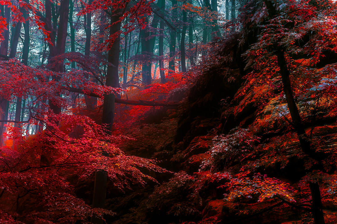Tales of the Bohemian woods by AlexGutkin