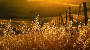 Tuscany golden sun