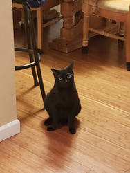 We got a new cat