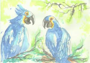 Aquarela arara azul