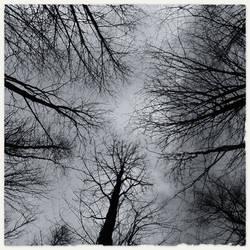 Gueule de... bois d'automne by Dario-L-Art