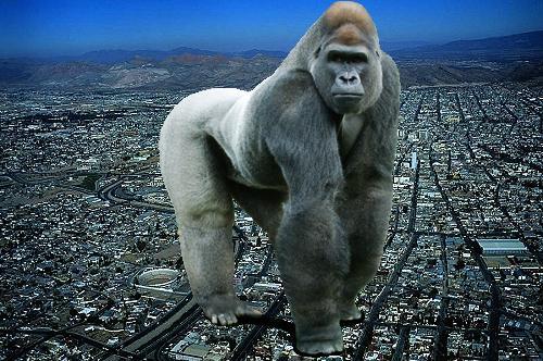 Biggest Gorilla Ever Recorded World's largest gorilla ever