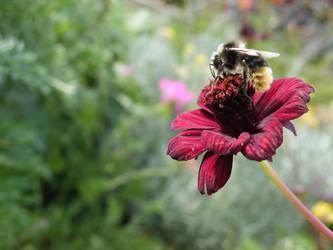 Bee my honey by BelphegorDeLEsip
