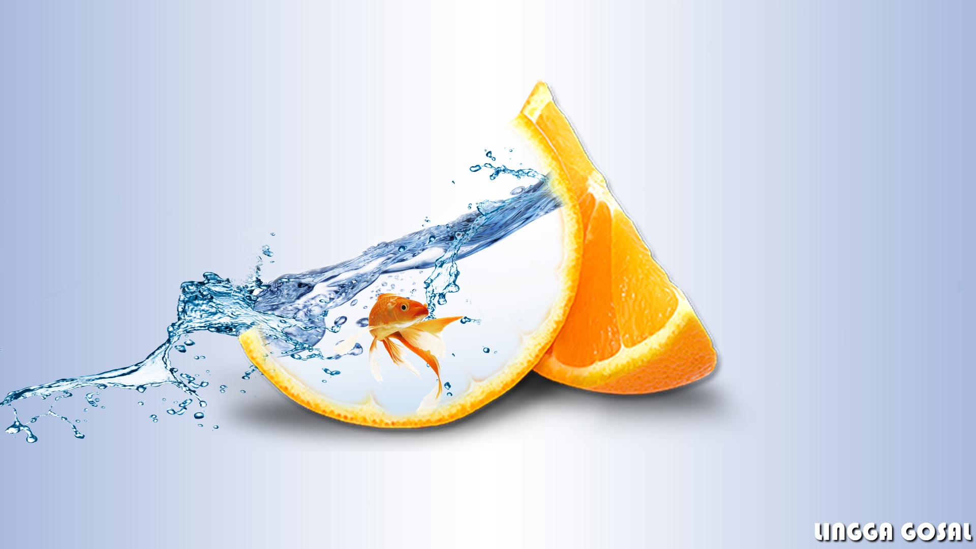 orange fruit photo manipulation aquarium gold fish by linggagosal6661 on deviantart