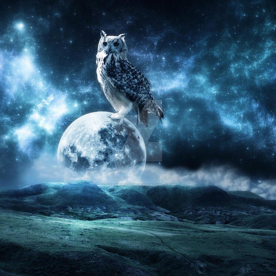 Moon owl by SabakuNoShi