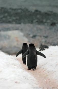 Antarctica :: 020 :: Chinstrap Penguins