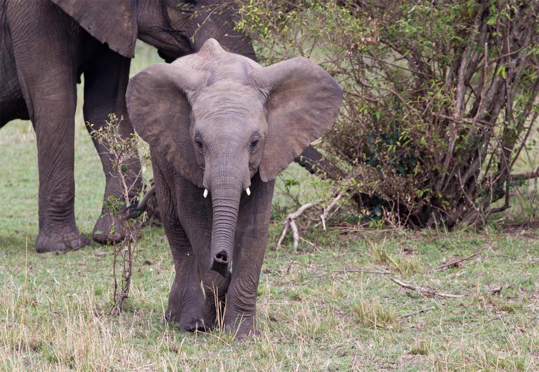 Elephant by greenjinjo