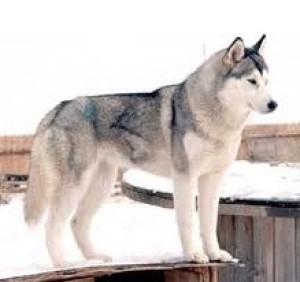 Huskey1998's Profile Picture