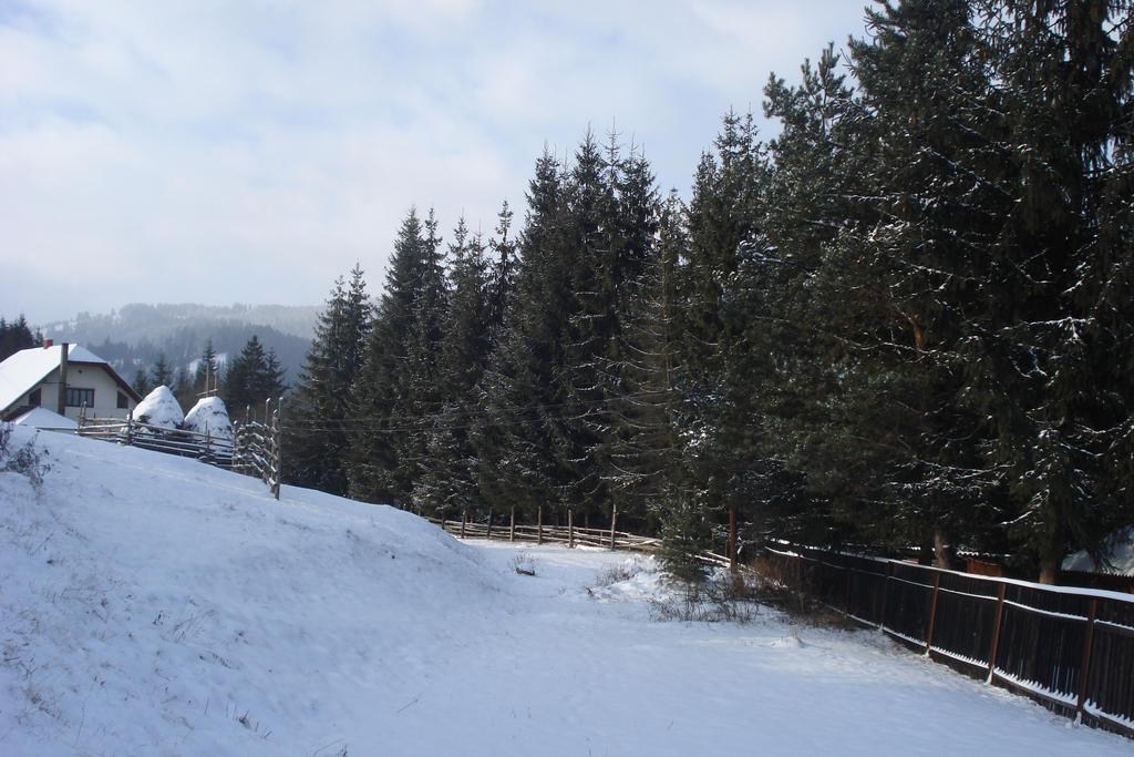 Snow by RoyalArt-BoleaVladut