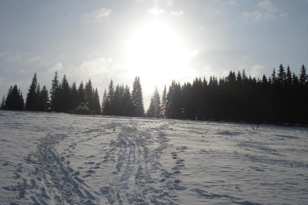 Winter . Sun . Snow. by RoyalArt-BoleaVladut