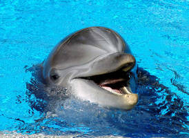 The Delight of Dolphins by shutterbabe2006