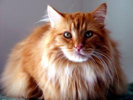 My Fuzzy Man in Orange by shutterbabe2006