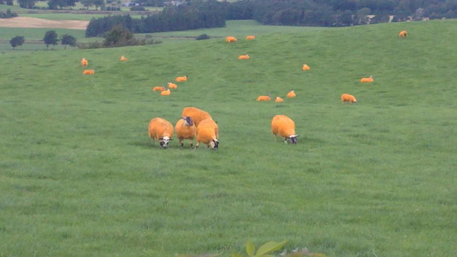 Cheese Puff Sheep by lillilotus