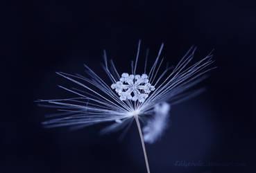 Frozen Beauty by Kittyoholic