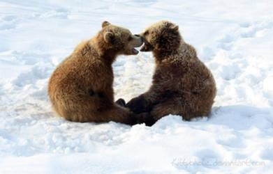 Bear Cubs by Kittyoholic