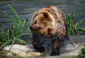 At The Bear Wash by Kittyoholic