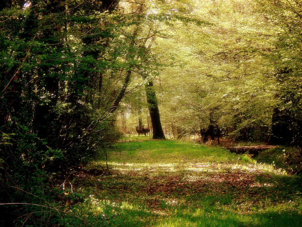 Forest Encounter by Bintavivi