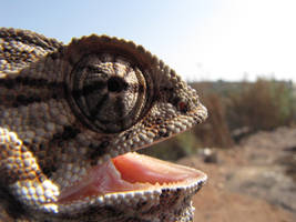 Grrrrr. . . by Maltese-Naturalist