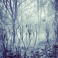 Foggy Trees by FUK-ME