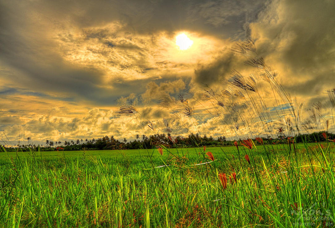 Paddy field of Sungai Burung, Penang by fighteden