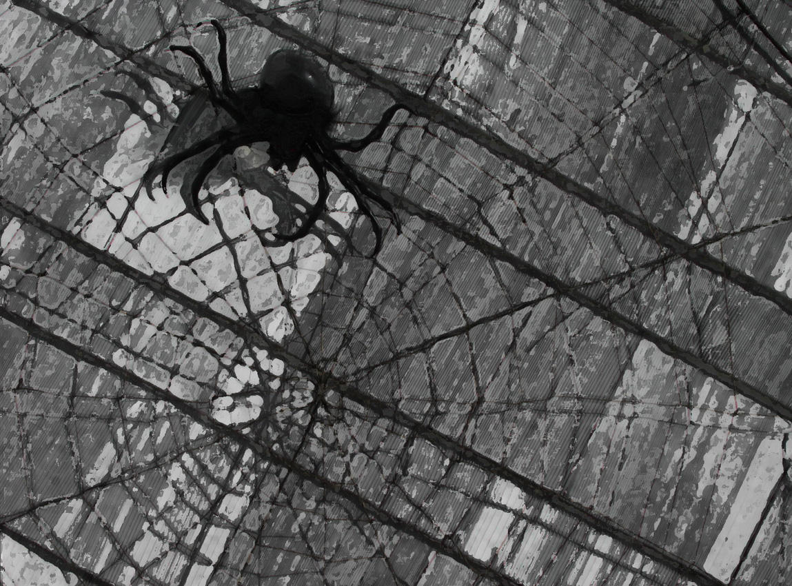 Spider by nogggin