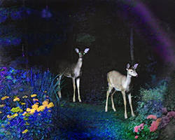 Evil Zombie Deer by nogggin