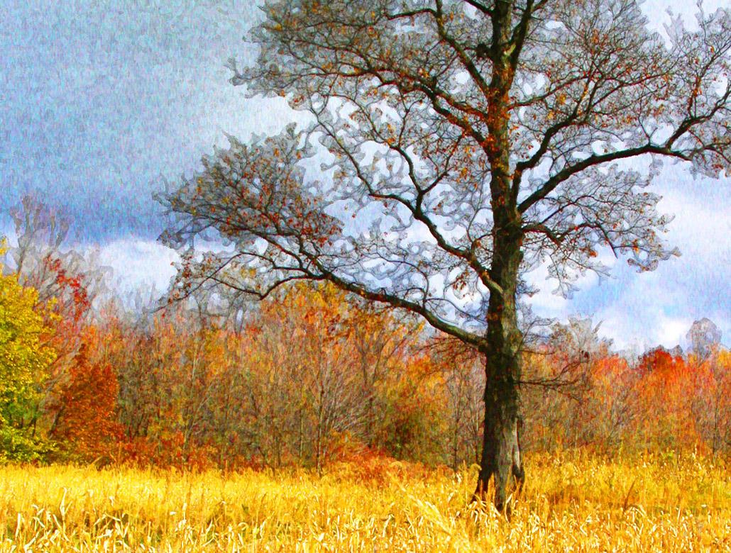 Fall Tree by nogggin