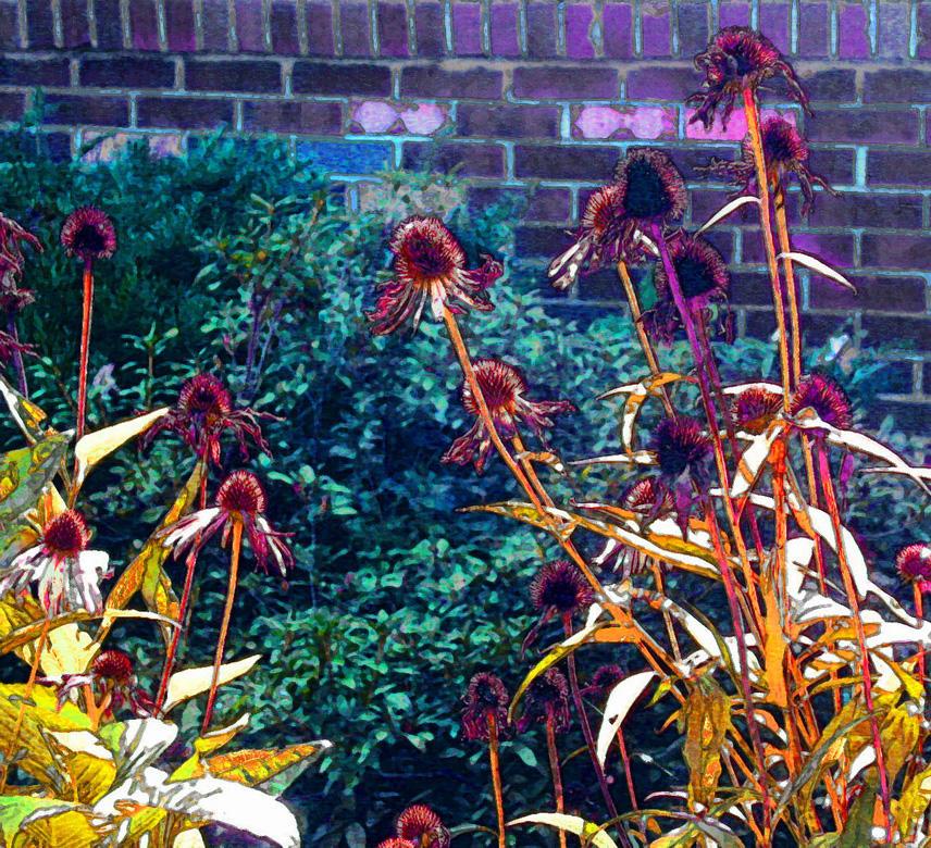 Dead Cone Flowers by nogggin