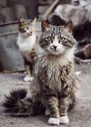 Stray Cats by Ursula-Gemma