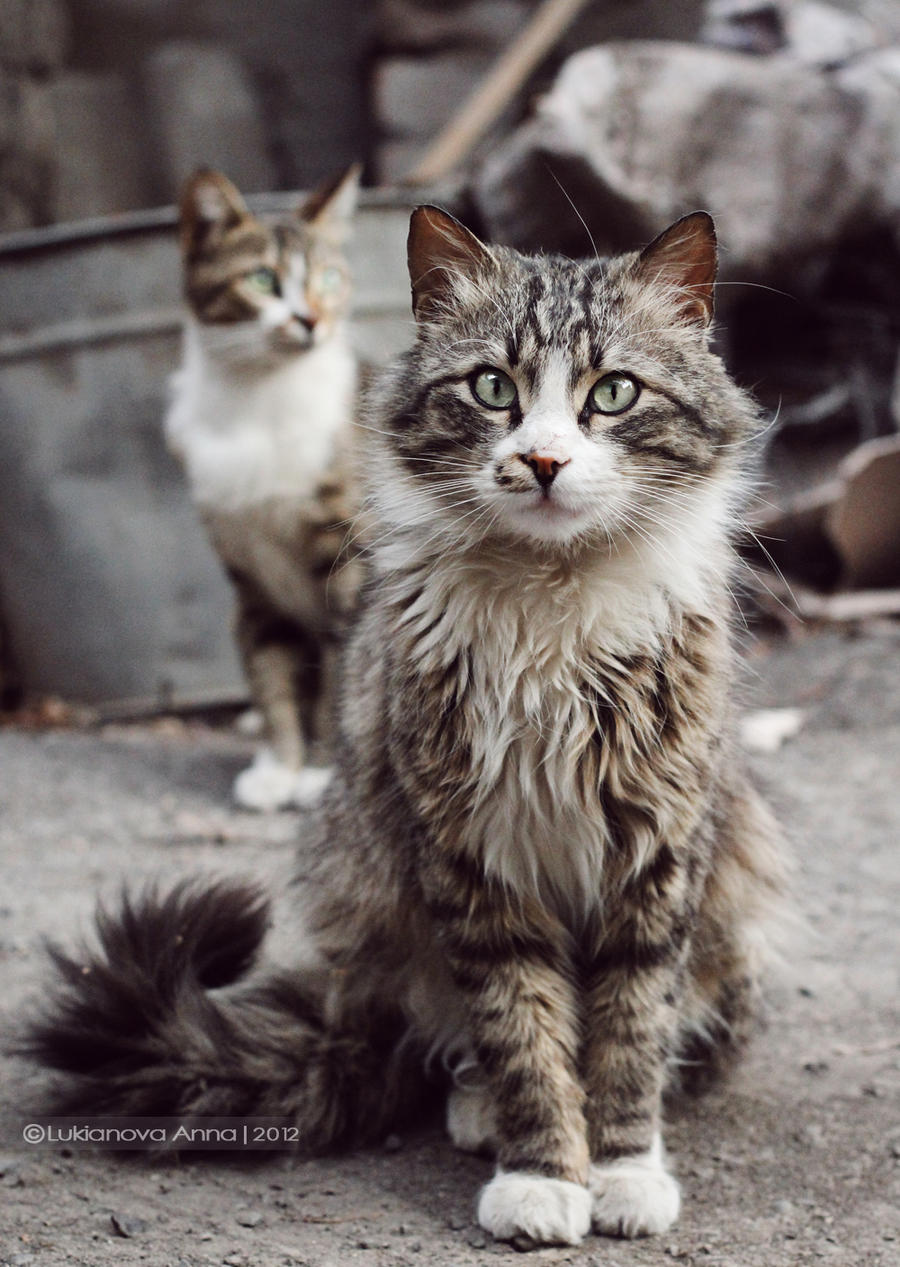 What Food To Feed Stray Cats